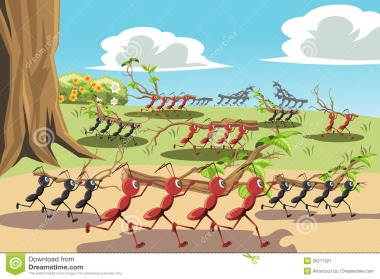 hormigas-de-trabajo-26211321